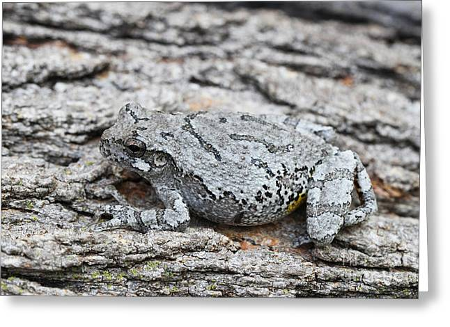 Greeting Card featuring the photograph Cope's Gray Tree Frog by Judy Whitton