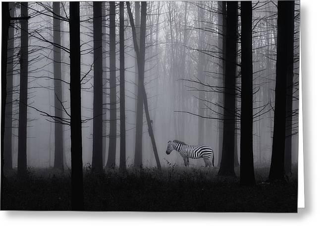 Grey Zebra In The Mist... Greeting Card