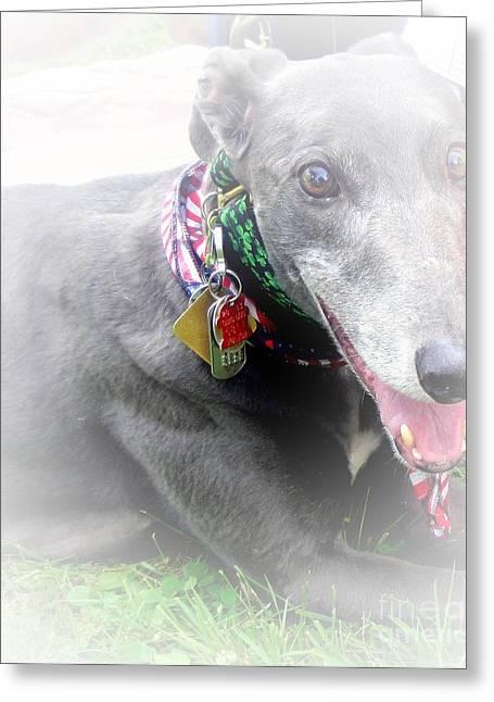 Greyhound Rescue 4 Greeting Card by Jackie Bodnar