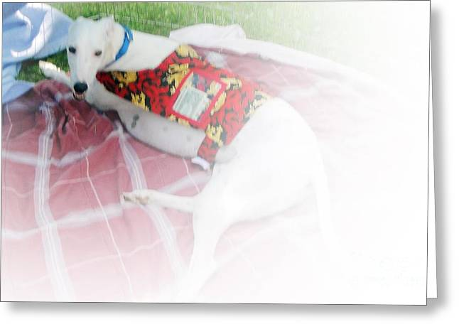 Greyhound Rescue 5 Greeting Card by Jackie Bodnar
