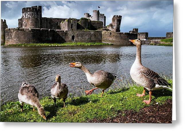 Greylag Geese And Caerphilly Castle Greeting Card by Paul Williams