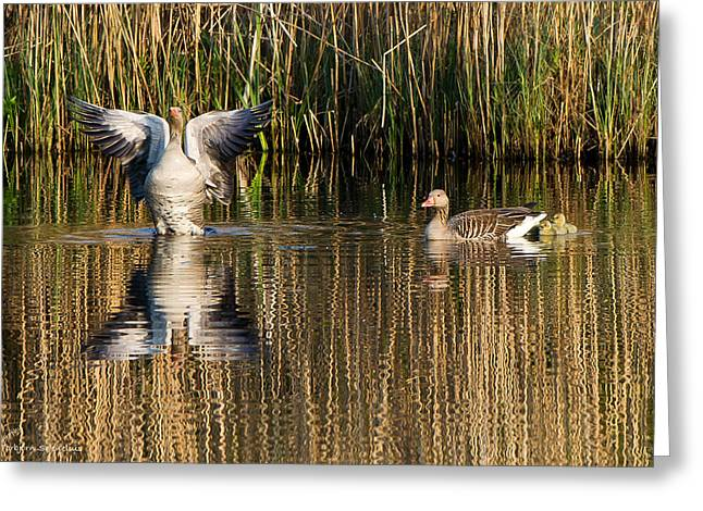 Greylag Goose Family Greeting Card