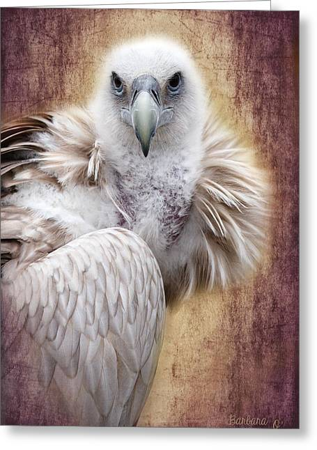 Griffon Vulture Greeting Card