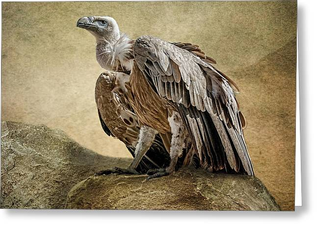 Greeting Card featuring the photograph Griffon Vulture by Brian Tarr
