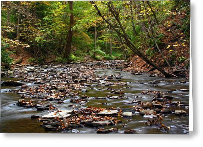 Creek Walk Greeting Card by Richard Engelbrecht