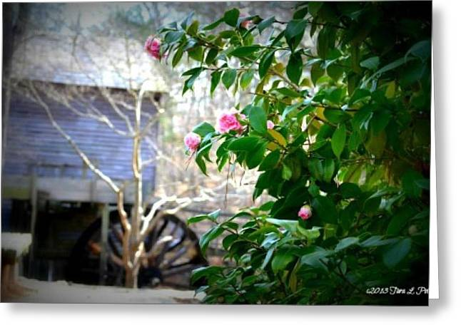 Greeting Card featuring the photograph Grist Mill Roses by Tara Potts