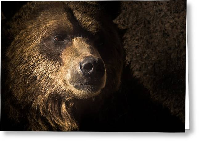 Grizzly 2 Greeting Card