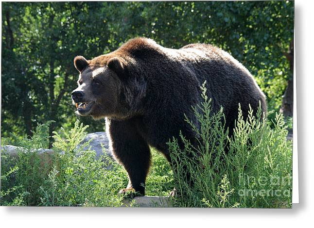 Grizzly-7756 Greeting Card by Gary Gingrich Galleries