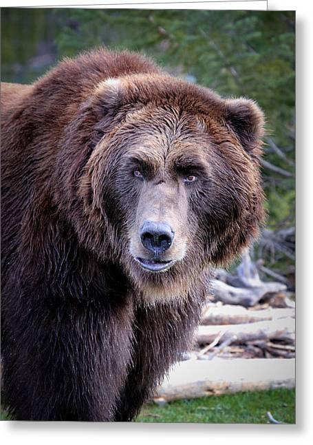Grizzly Greeting Card by Athena Mckinzie