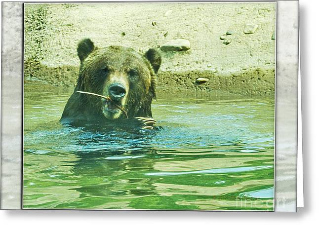 Grizzly Bath Greeting Card by Walter Herrit