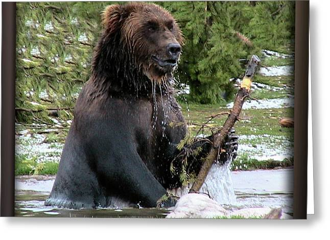 Grizzly Bear 08 Greeting Card by Thomas Woolworth