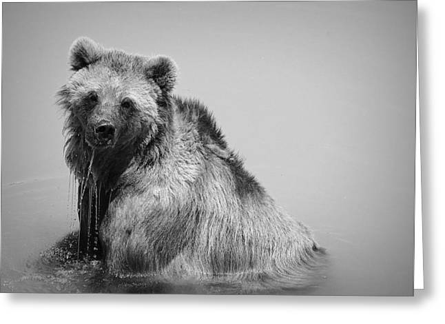 Grizzly Bear Bath Time Greeting Card