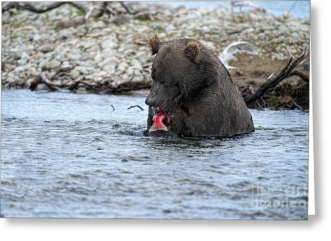 Brown Bear Eating Salmon Greeting Card by Dan Friend