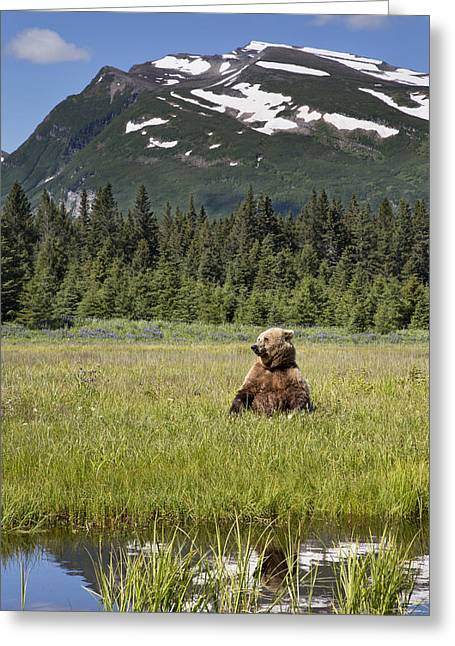 Grizzly Bear In Meadow Lake Clark Np Greeting Card
