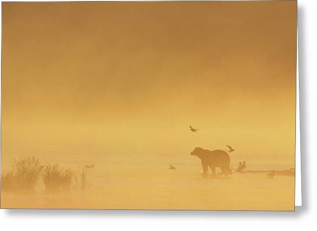 Grizzly Bear In Morning Fog Greeting Card by Matthias Breiter