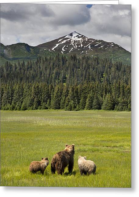 Grizzly Bear Mother And Cubs In Meadow Greeting Card