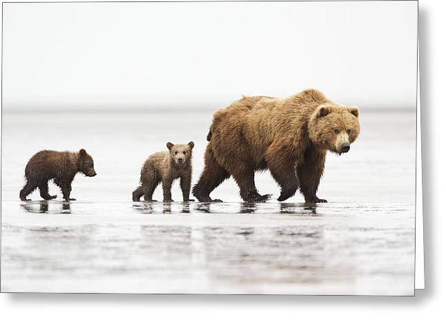 Grizzly Bear Mother And Cubs Lake Clark Greeting Card