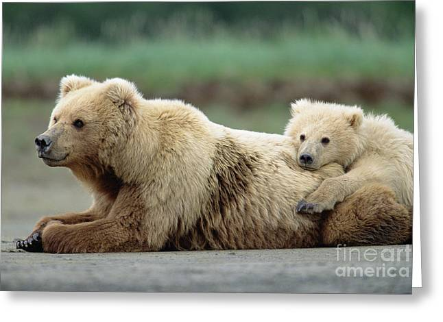 Grizzly Mother And Son Greeting Card