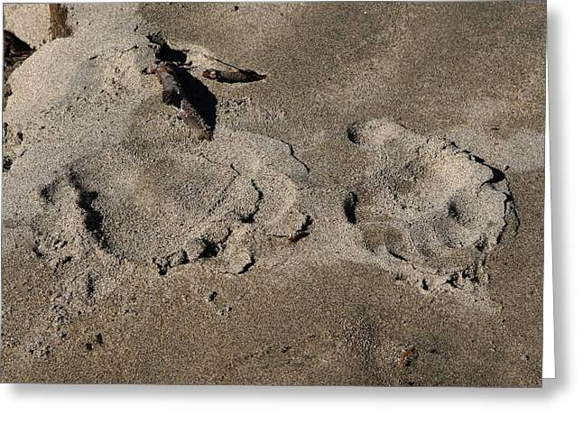 Grizzly Bear Paw Prints Greeting Card