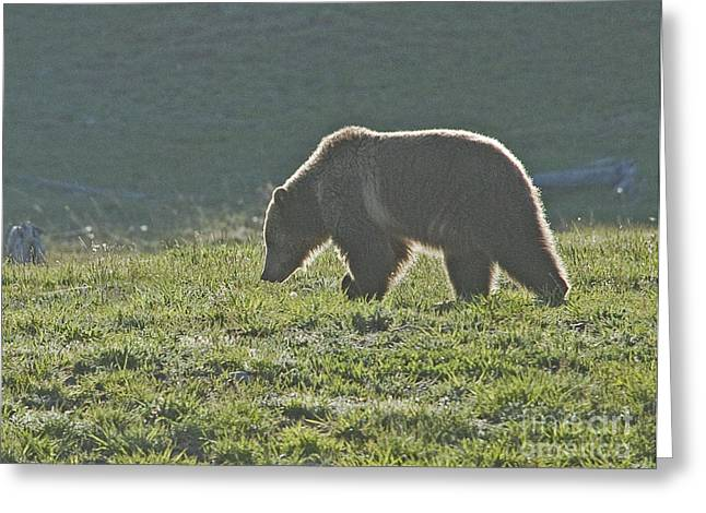 Grizzly Bear With Aura Greeting Card by Bob Dowling
