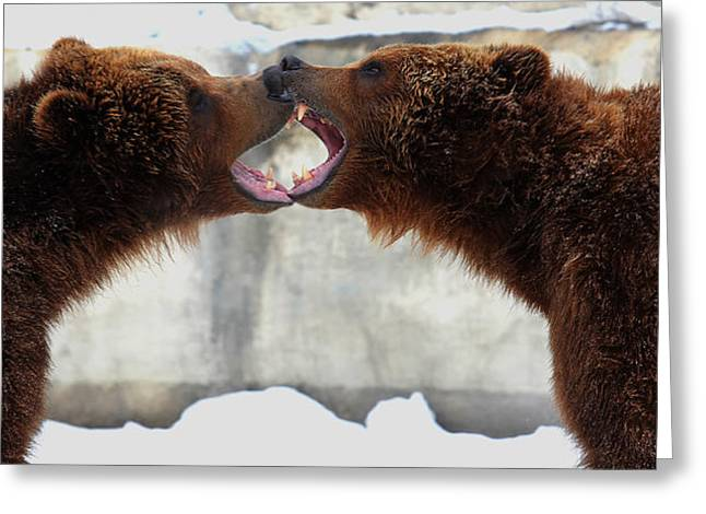 Greeting Card featuring the photograph Grizzly Bears Facing Off by Jerome Lynch