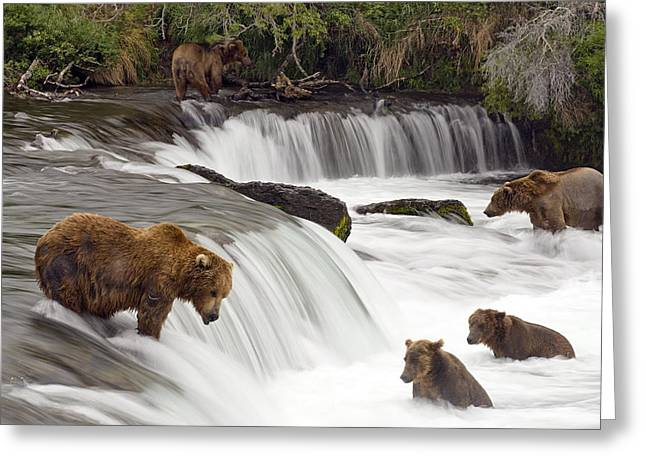 Grizzly Bears Fish At Brooks Falls In Greeting Card by Chris Miller