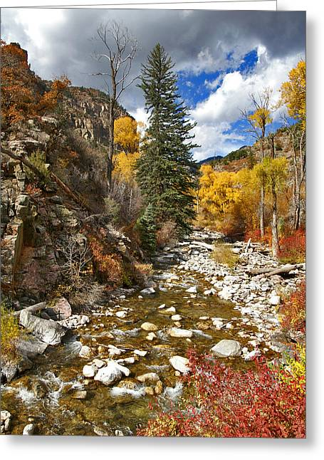 Greeting Card featuring the photograph Grizzly Creek Cottonwoods Vertical by Jeremy Rhoades