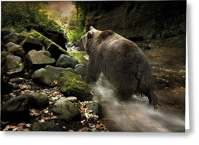 Grizzly Creek Greeting Card by Roy  McPeak