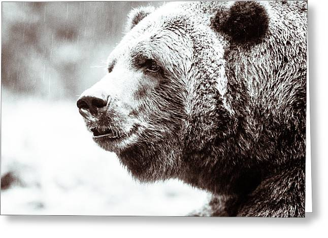 Grizzly In Black And White Greeting Card by Wade Brooks
