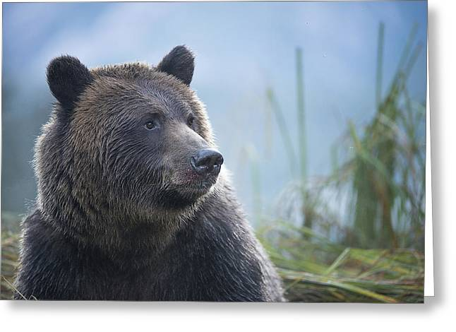 Grizzly In Morning Light Greeting Card