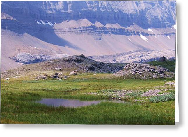 Grizzly Meadows Greeting Card