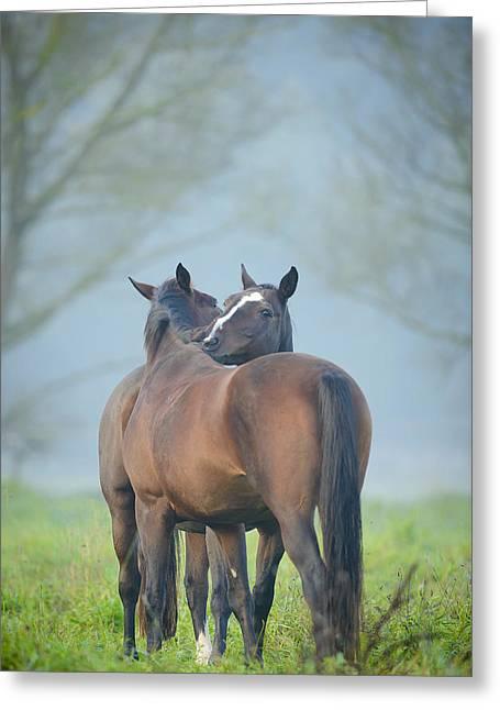 Grooming Horses Greeting Card