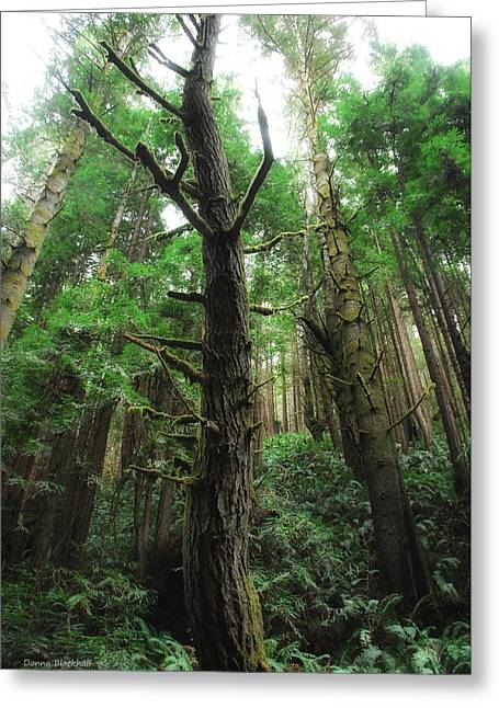 Groovin With The Redwoods Greeting Card