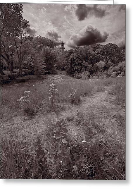 Gross Point Beach Grasses Bw Greeting Card