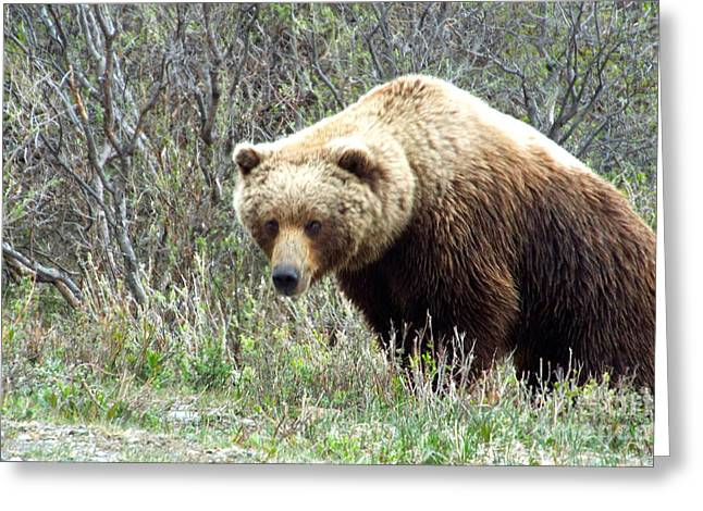 Grouchy Grizzly Greeting Card