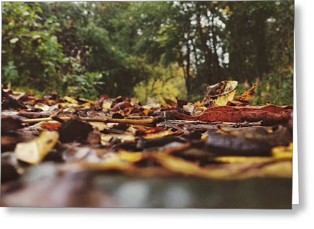 Greeting Card featuring the photograph Ground Level Leaves by Nikki McInnes