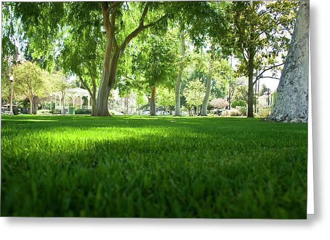 Ground View Greeting Card by Terry Thomas