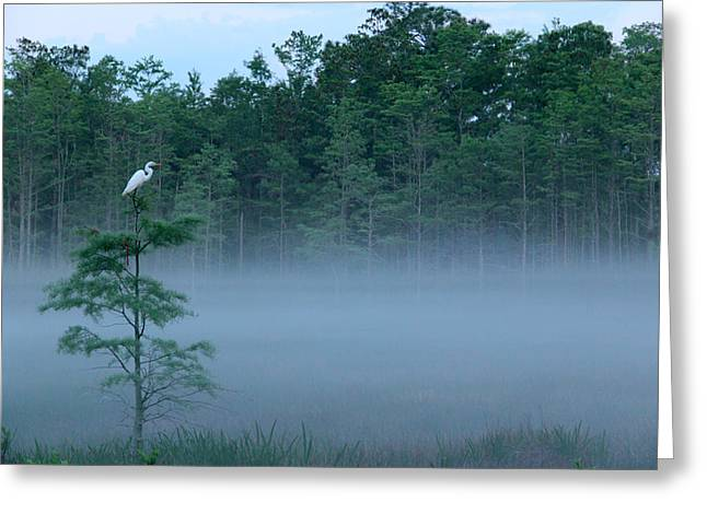 Grounded Egret Greeting Card