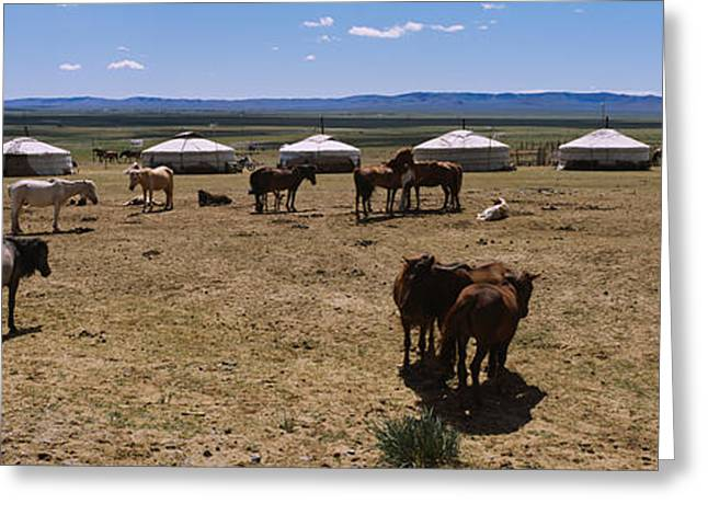 Group Of Horses And Yurts In A Field Greeting Card by Panoramic Images