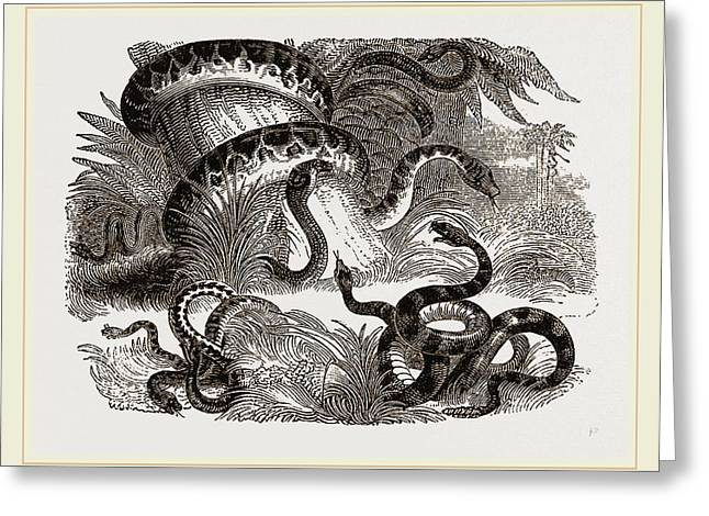 Group Of Terrestrial Snakes Greeting Card by Litz Collection