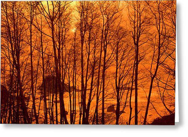 Grove Of Alder Trees In Humboldt Greeting Card