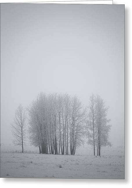 Grove Of Trees Covered In Hoar Frost On Greeting Card by Roberta Murray