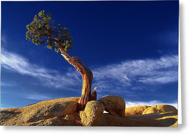 Growing In Rock 2 Greeting Card by Thomas Born