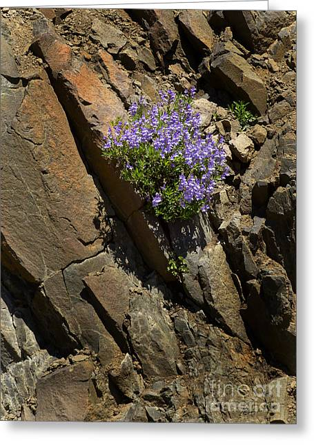 Growing Out Of Rocks-signed-#3810 Greeting Card by J L Woody Wooden