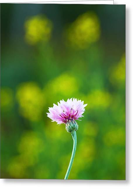 Growing Greeting Card by Suradej Chuephanich