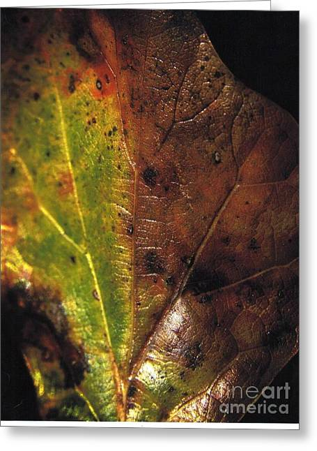 Growth-leaf Greeting Card