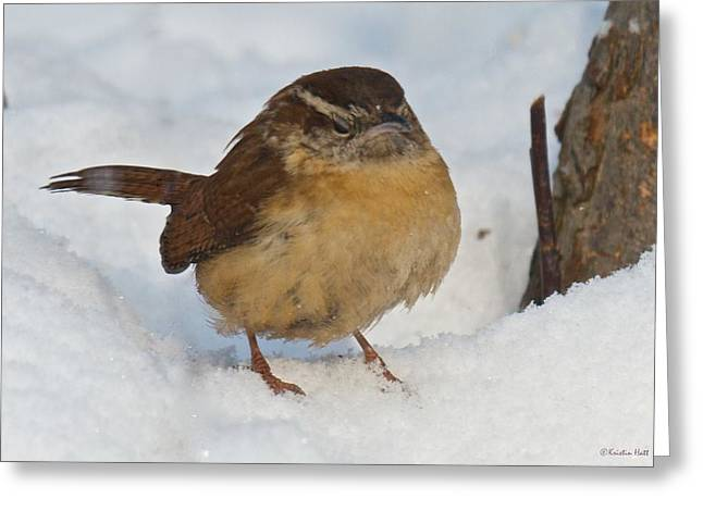 Grumpy Wren Greeting Card