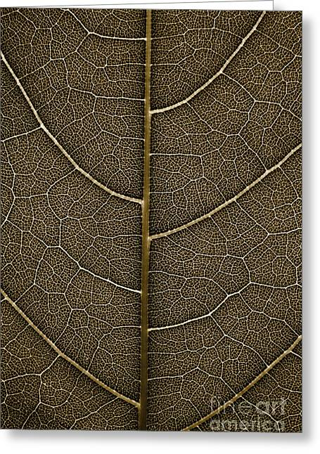 Greeting Card featuring the photograph Grunge Leaf Detail by Carsten Reisinger