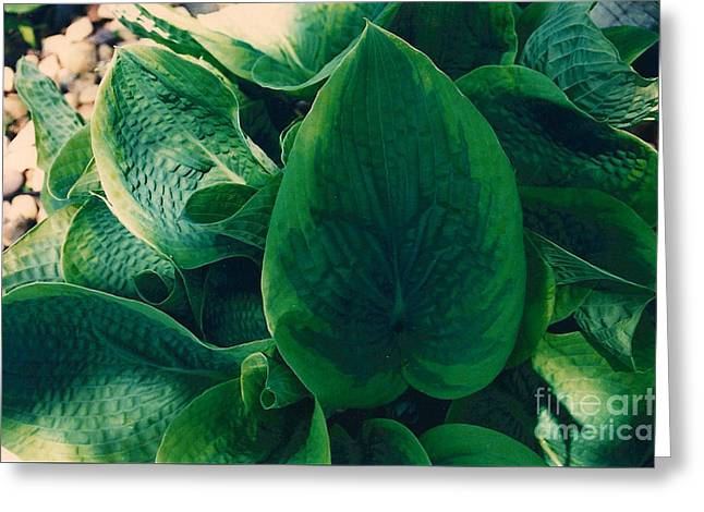 Guacamole Hosta Greeting Card