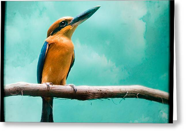 Greeting Card featuring the photograph Guam Kingfisher - Exotic Birds by Gary Heller